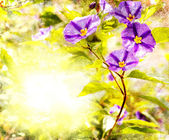 Spring background with a purple flowers — Stock Photo