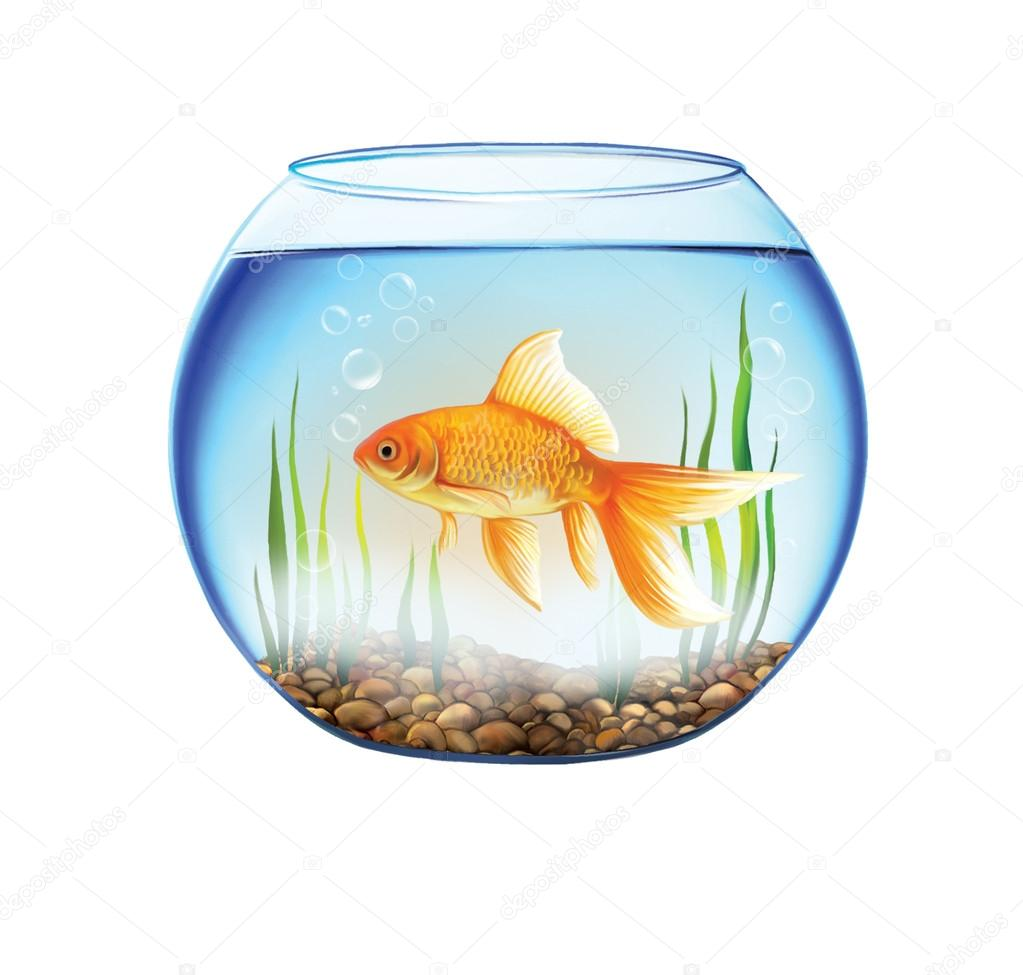 gold fish in a round aquarium fish bowl stock photo. Black Bedroom Furniture Sets. Home Design Ideas