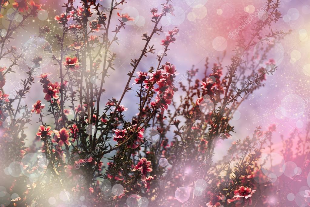 Cerisier japonais sakura arbre fleur photographie - Arbre japonais rose ...