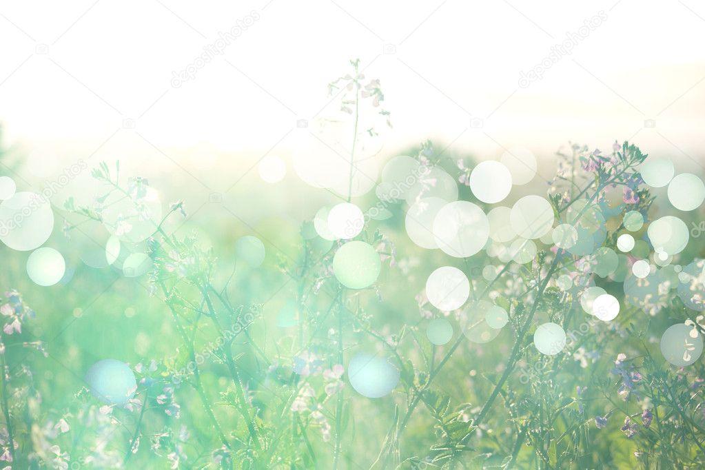 Цветы на лугу. летний фон — Стоковое ...: ru.depositphotos.com/24446679/stock-photo-flowers-on-meadow-summer...