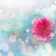 Camellia — Stock Photo