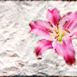 Pink lily flower old brown grunge paper — Stock Photo