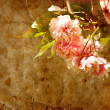 Spring background. Pink blossom — Stock Photo