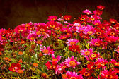 Beautiful spring background with little red and pink flowers — Stok fotoğraf