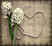 Hyacinth flowers on a linen background. — Stock Photo