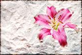 Růžové lilie květ staré hnědé grunge papír — Stock fotografie