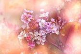 Sfondo bella primavera con fiore — Foto Stock