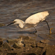 Stock Photo: White bird in water