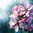 Beautifull blossom — Stock Photo
