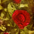 Beautiful red rose — Stock Photo #24502471