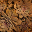 Stock Photo: Brown floral background