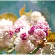 Sommer floral background. Beautifull flowers — Stock Photo