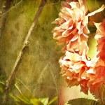 Grunge floral spring background — Stock Photo #24504085