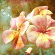 Grunge floral spring background — Foto de Stock