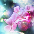 Floral sommer background — Stock Photo