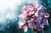 Beautifull blossom — Stock Photo