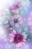Flowers on blue background — Stock Photo