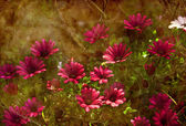 Beautiful spring background with little red and pink flowers — Stock Photo