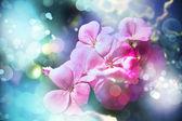 Tło kwiatowy sommer — Zdjęcie stockowe