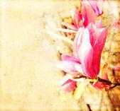 Fleurs de Magnolia — Photo