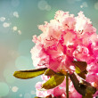 Beautiful spring background with pink flower — Stock Photo