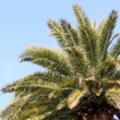 Palm tree in the wind — Stock Video