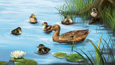 Water birds, ducks and ducklings in the water — Stock Photo