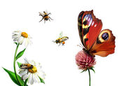 Butterfly, daisy, and Bees — Stock Photo