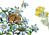 Mouse, grasshoper blue meadow flowers — Stock Photo