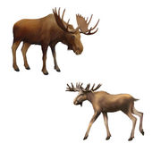 Adult moose without horns, Isolated Illustration on white background. — Stock Photo