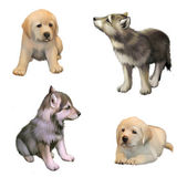 Cute little puppies of yellow labrador retriever and siberian husky. isolated illustration on white background — Stock Photo