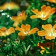 Flower backgrond , spring bloom — Stock Photo