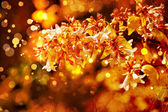 Beautiful and bright floral autumnal background — Stock Photo