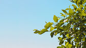 Foglie verde natura — Foto Stock