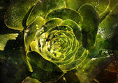 Flower backgrond , spring bloom — Stock Photo