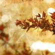 Autumn flowers on grungy paper — Stock Photo