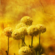 Autumn flowers on grungy paper — Stock Photo #37347495