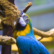Parrot in captivity at zoo — Stock Photo #37349537