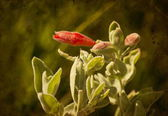 Floral backgrond, voorjaar bloeien — Stockfoto
