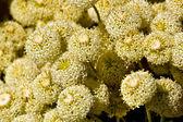 Backgrond fiore, fioritura primaverile — Foto Stock