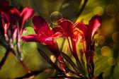 Bloem backgrond, voorjaar bloeien — Stockfoto
