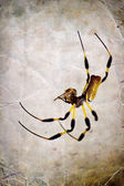 Grunge cardboard background with spider — Stock Photo