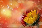 Sunflower on bright bokeh background — Stock Photo