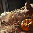 Stock Photo: Thanksgiving Background with Pumpkins
