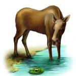 Elk in the river — Stock Photo