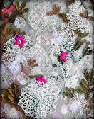 Weihnachten Hintergrund mit Cookies, Tanne Äste und Schneeflocke — Stockfoto