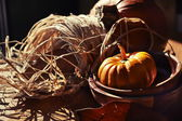 Thanksgiving Background with Pumpkins — Stock Photo