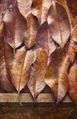 Feuilles d'automne fond — Photo