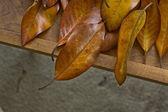 秋の紅葉. — ストック写真