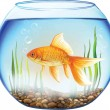Gold fish in a Round aquarium with stones and plants. — Stock Vector
